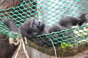 Tropensafari_Zoo Rostock_Kloock