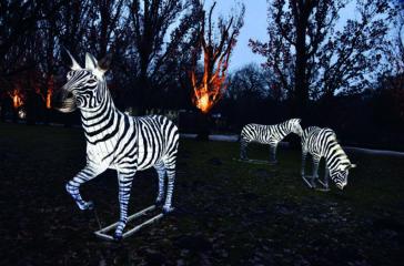 Zoolights_Joachim_Kloock