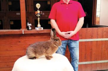Kaninchenschau-42-web