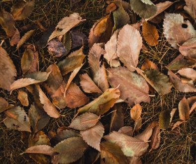top-view-shot-of-brown-leaves-web